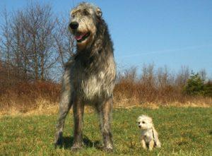 大型犬と小型犬