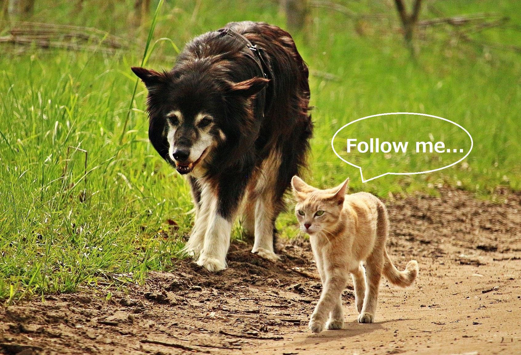 猫についていく犬