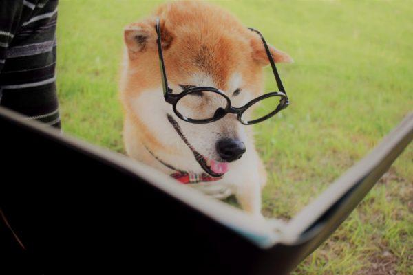 犬学習する