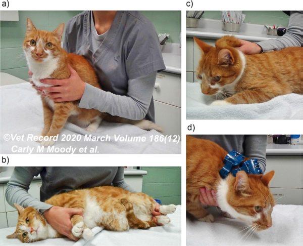 猫の拘束方法