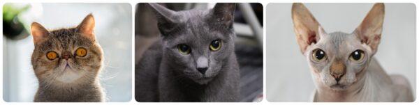 異なる猫種の顔